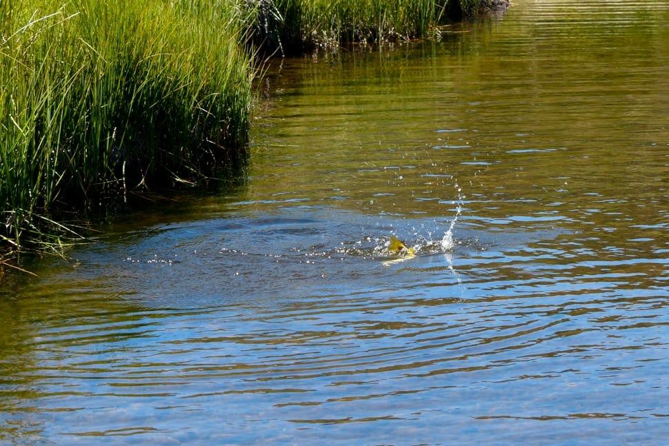 fly fishing at Guthega